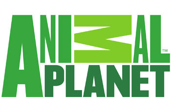 animal planet en direct tv regarder animal planet tv live hd gratuit. Black Bedroom Furniture Sets. Home Design Ideas
